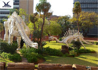 Outdoor Dinosaur Skeleton Model , Customized T Rex Skull Replica Full Size